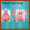 Hot Sale Vivid Throat Heart Lung Anatomical Model