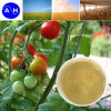 Manganese Amino Acid Chelate Fertilizer with Plant Organic Nutrient