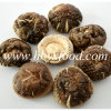 Green Healthy Dried Smooth Mushroom for Sale