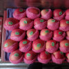 Exported Standard Quality of Fresh Red Qinguan Apple