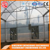 Professional Single Layer Poly Film Multi Tunnel Greenhouse