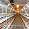 Automatic Poultry Cage Equipment for Broiler House