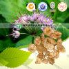 Factory Supply Xie Bai Allium Extract Macrostemon
