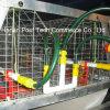 Pullet Brooder Chicken Cage System