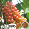 Factory Supply 100% Natural Schizandra Berry Extract