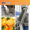 Surfing Fresh Fruit Cleaning Machine