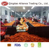 Top Quality Fresh Whole Carrot with Competitive Price