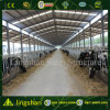 Low Cost Steel Cowshed Building