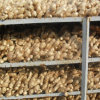 Good Quality Fresh Ginger for EU Market