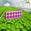 Aeroponics System Apollo-10 LED Grow Light for Greenhouse