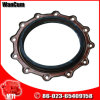 M11 Cummins Engine Part Crankshaft Oil Seal 4923644