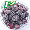 Hot Sell Frozen Blackberry