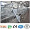 Stainless Steel Galvanized Bird Chicken Layer Cage/ Pullet Cage