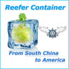 Reefer Container by Sea Freight Shipping From China to America