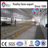 Factory Supply Broiler Poultry Farm Equipment Chicken Feeding