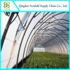 Agricultural Commercial Plastic Film Greenhouse