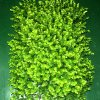 40*60 Plastic Grass