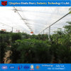 Chinese Factory Low Cost Light Deprivation Film Agricultural Greenhouse for Cucumber