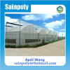 Low Cost Plastic Film Indoor Greenhouse for Agricultural