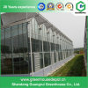 Agricultural Glass Venlo Greenhouse with High Quality