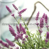 Wholesale Artificail Plastic Lavender Flower for Wedding Home Decoration (SW20201)