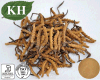 Cordyceps Extract 20%, 30% Polysaccharides by UV