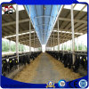 Prefabricated Steel Structure House for Steel Cow Farm Shed