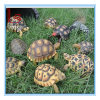 Customized Wholesale Simulation Animal Resin Handicraft Turtle Model Furnishing Articles Garden Decoration
