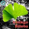 Ginkgo Biloba Extract / Flavone Glycoside / Terpene Lactone