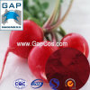 Manufacturers Supply Natural Pigment Dye Radish Red