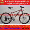 "Tianjin Gainer 26"" Aluminum MTB Bicycle 21sp Stable Quality"