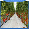 Hot Sale Hydroponics Greenhouse for Agricultural Greenhouse