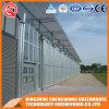 Commercial Steel Frame/ Aluminum Profile Polycarbonate Sheet Greenhouse for Vegetable