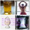 Extract Powder Erectile Dysfunction Treatment Crepis Base for Man