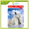 Solvent Digital Printing PVC Coated Mesh (RJCM003)