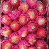 Hot Selling! Fresh Red Qinguan Apple