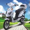 Panda Electric Bike with Pedal