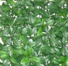 Artificial Plastic Baobob Green Leaves Fence (MW16035)
