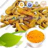 CAS: 458-37-7 Turmeric Curcumin Curcumin Pharmaceutical Grade