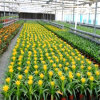 High Quality Low Price China Glass Greenhouse for Vegetable