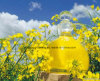 Refined Rapeseed Oil /Canola From China Clear and Transparent