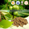 Cerebral Tonic Herbal Medicine Sharpleaf Galangal Fruit