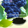 Natural Bilberry Extract 25% Anthocyanidins