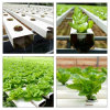 High Quality Double-Film Multi-Span Hydroponic Agricultural Green House