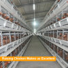 Automatic laying hen used poultry farming equipment for commercial chicken
