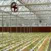 Hot Air Circulation Fans for Greenhouse Cooling System