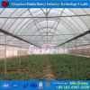 China Factory Professional Film Green House for Pepper