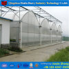 Commercial Film Hydroponic Greenhouse for Sale