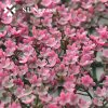 Custom Plastic Pink Decorative Artificial Plant Wall Grass Flower