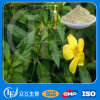 High Quality Damiana Leaf Extract (LY-0136)